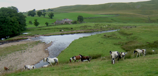 Ponies on the River Eden